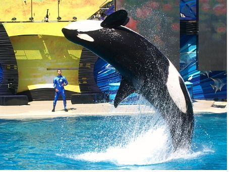 The One Ocean killer whale show at SeaWorld San Diego