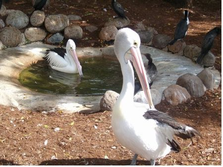 Photo of Seabird Rehabilitation Aviary