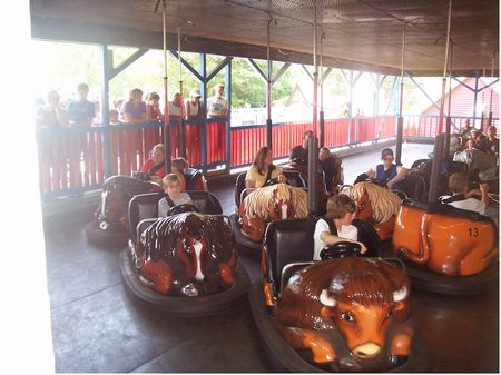 Photo of Rough Riders Bumper Cars